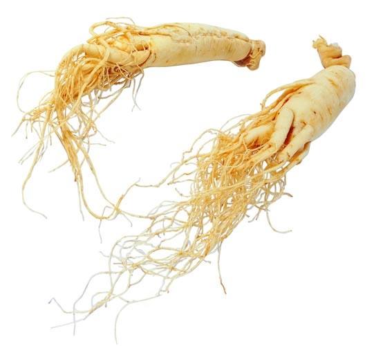 akar-ginseng-putih