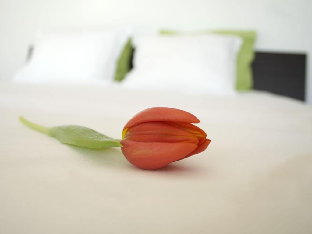 rose-bed