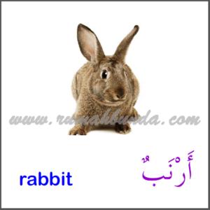 Flashcard hijaiyah tampilan belakang